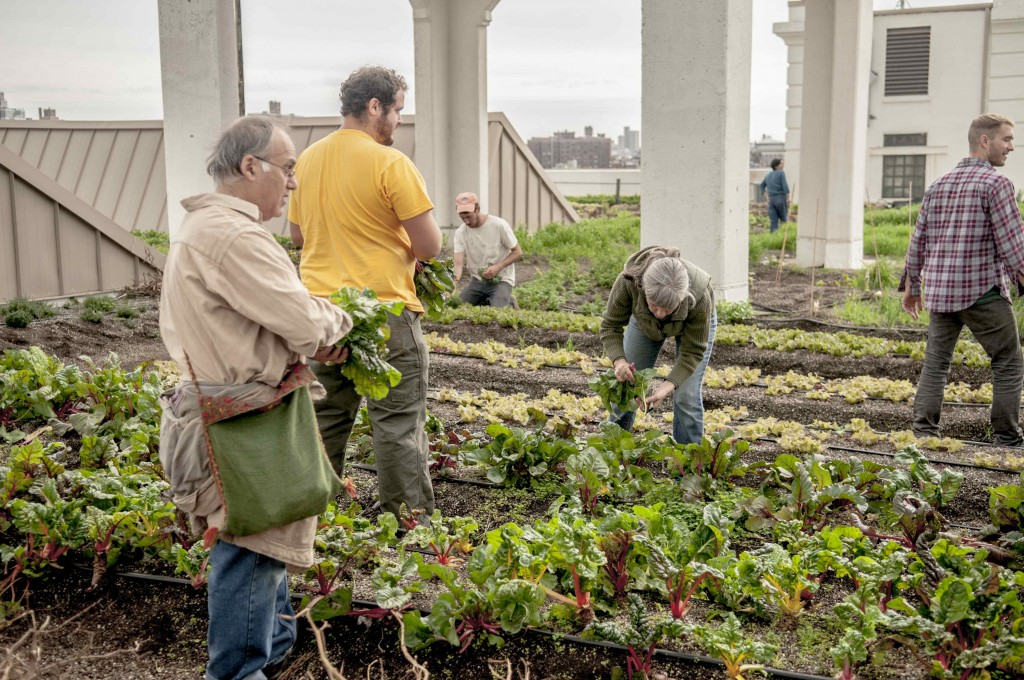 Just Food Farm School Visits Brooklyn Grange
