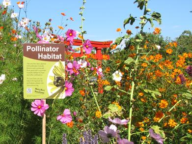 pollinator_garden_web_235