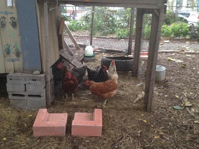 small fundraising raise money urban chickens