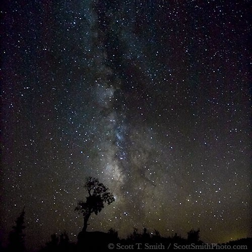 Utah. USA. Milky Way and starry sky above small aspen tree. Thousand Lake Mountain. Fishlake National Forest.